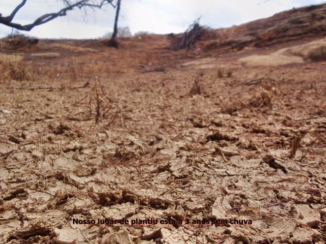 04 Nação Kiriri - Seca em Banzaê - Entrevista Dernival Kiriri - terra seca