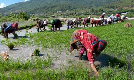 Bhutan,el primer país del mundo con el 100% de su agricultura ecológica2