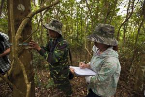 El análisis de la FAO se basa en información forestal nacional. Investigadores de la Evaluación Forestal Nacional miden el grosor de los árboles en Back Kan (Viet Nam).